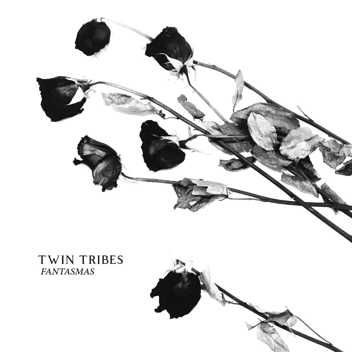 Post-punk shivers -Twin Tribes – Ceremony
