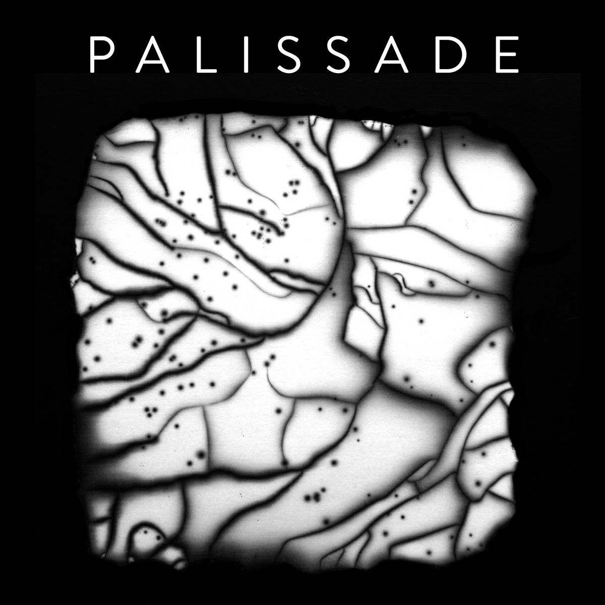 Post-punk shivers – Palissade – Palissade